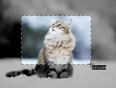 indexcat